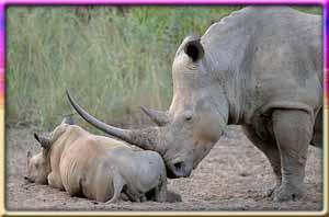 Pilanesberg National Park in Gauteng
