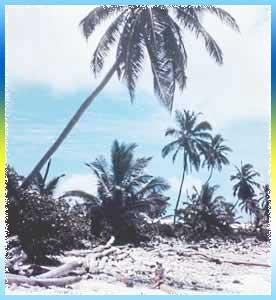 Plage Paradiso Beach