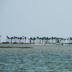 Pulicat Lake in Chennai