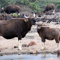 Radhanagari Wildlife Sanctuary in Kolhapur