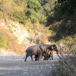 Rajaji National Park in Dehradun