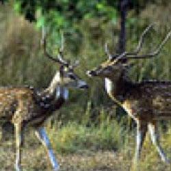 Ramnagar Wildlife Sanctuary in Kashmir