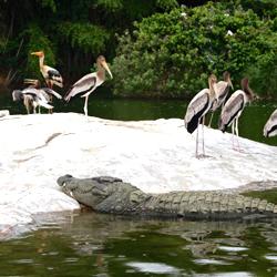 Ranganathittu Bird Sanctuary in Mysore