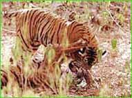 Ranthambore Wildlife Sanctuary in Ranthambore