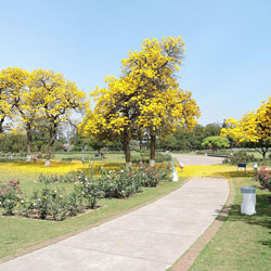 Rose Garden in Chandigarh City