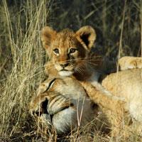 Sabi Sands Game Reserve in Mpumalanga