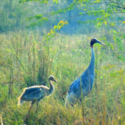 Salim Ali Bird Sanctuary in Goa City
