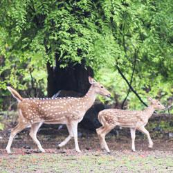 Sanjay National Park in Singrauli