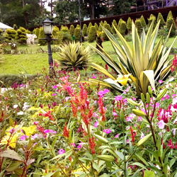 Saramsa Garden in Gangtok