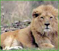 Sasan Gir Wildlife Sanctuary in Junagadh