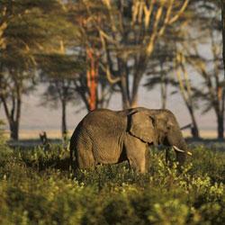Sepahijala Wildlife Sanctuary in Agartala
