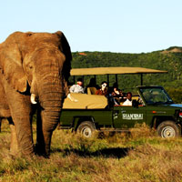 Shamwari Game Reserve in Eastern Cape