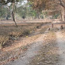 Sonai Rupai Wildlife Sanctuary in Tezpur