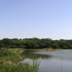 Sultanpur National Park in Gurgaon