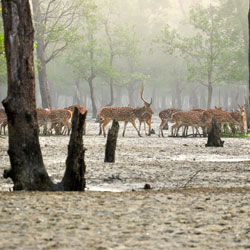 Sunderbans National Park in Kolkata