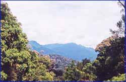 Taman Negara National Park in Pahang