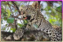 Tankwa Karoo National Park in Northern Cape