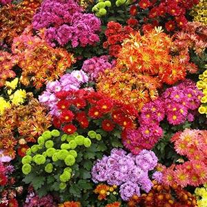 Terraced Flower Garden