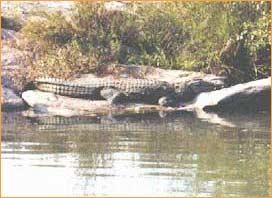 The Mysore Zoo