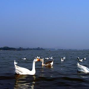 The Sukhna Lake