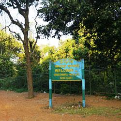 Trekking in Agumbe Ghat in Shimoga