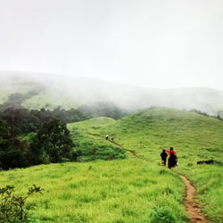 Jungle Trekking in  Shimoga in Shimoga