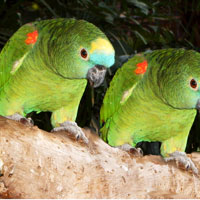 Umgeni River Bird Park in Durban