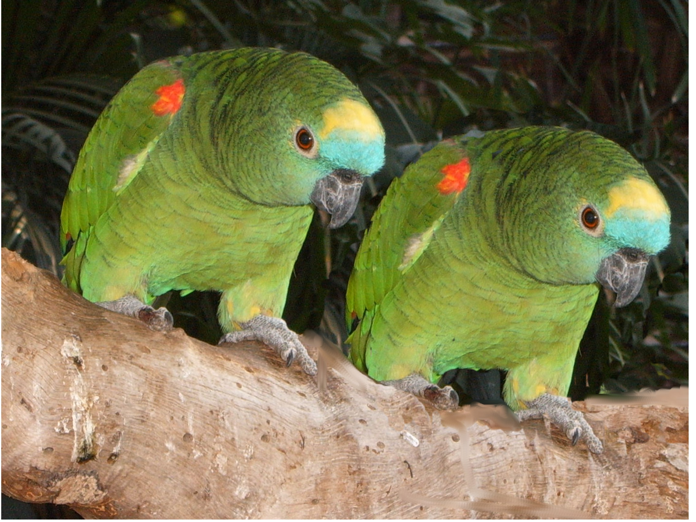 Umgeni River Bird Park in Durban