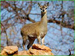 Vaalbos National Park in Northern Cape