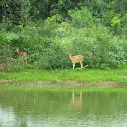 Van Vihar National Park in Bhopal