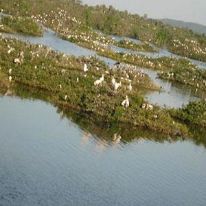 Vedanthangal Bird Sanctuary in Chennai
