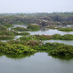 Vedanthangal Bird Sanctuary in Chennai