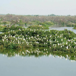 Vedanthangal Bird Sanctuary 2 in Kanchipuram