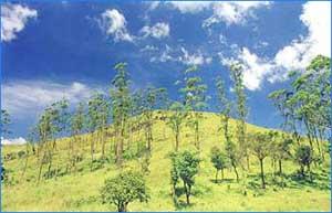 Wayanad Hills in Wayanad