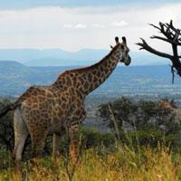 Weenen Nature Reserve in Kwazulu Natal