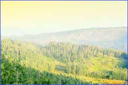 Yercaud Hills in Yercaud