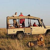 Masai Mara - Lake Manyara - Ngorongoro crater - Serengeti