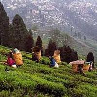 Darjeeling - Gangtok - Changu - Yumthang - Bagdogra