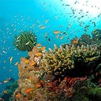 Andaman - Portblair - Havelock