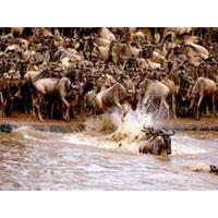 Nairobi - Masai Mara - Nakuru