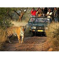 New Delhi - Agra - Ranthambore - Jaipur