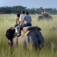 Kolkata - Guwahati - Manas National Park - Nameri National Park - Kaziranga National Park - Jorhat - Gibbon's Sanctuary - Dibru Saikhowa National Park - Namdapha National Park - Deban - Hornbill Camp - Deban - Dehing Patkai Wildlife Sanctuary - Dibrugarh - Kolkata