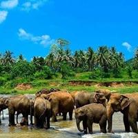 Colombo - Negambo - Pinnawala - Kandalama - Anuradhapura - Aukana - Sigiriya - Polonnaruwa - Dambulla - Matale - Kandy - Nuwara Eliya - Horton Plains - Bandarawela - Udawalawe - Embilipitiya - Ratnapura - Ahungalla - Galle - Colombo
