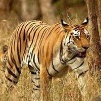 Delhi - Tadoba National Park -  Nagzira National Park - Nagpur - Delhi