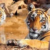 Delhi - Sariska - Jaipur - Ranthambore - Bharatpur - Agra