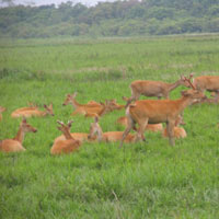 Dibrugarh - Digboi - Saikhowa National Park - Sivasagar - Jorhat - Kaziranga National Park
