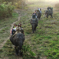 Guwahati - Kaziranga - Dimapur - Kohima - Mokokchung - Jorhat