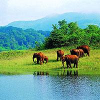 Cochin - Munnar - Thekkady - Alleppey - Kumarakom - Kovalam - Kanyakumari