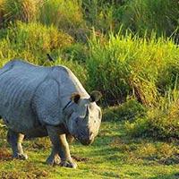 Jaldapara Sanctuary - Gorumara National Park
