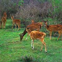 Mysore - Ooty - Brindaban Garden - Coonoor